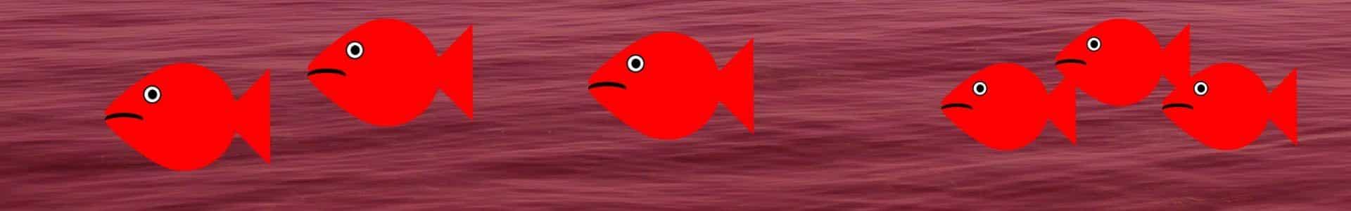 Blå fisk - røde fisk